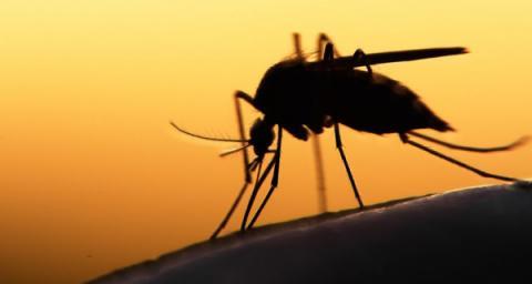 cerebral malaria pesonal story