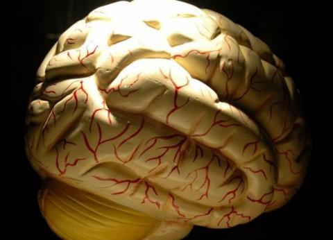 Backstory Epilepsy